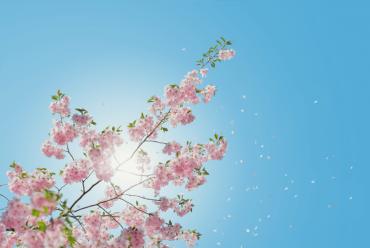 Blühender Frühling sorgt für Pollenallergie